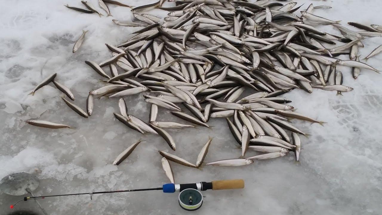 Ловля корюшки в окрестностях Сахалина