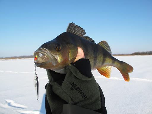 Зимняя рыбалка. Блесна с цепочкой