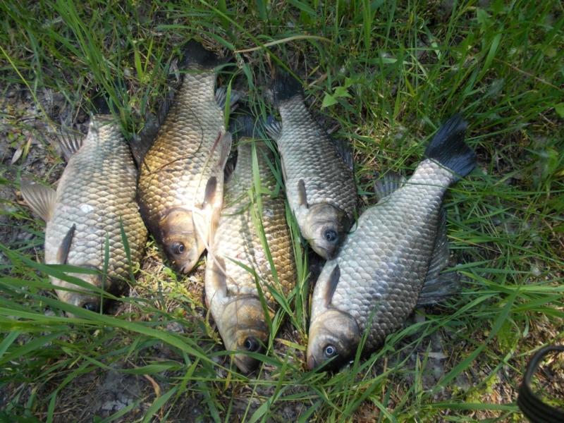 Весенняя насадка и прикормка для ловли карасей