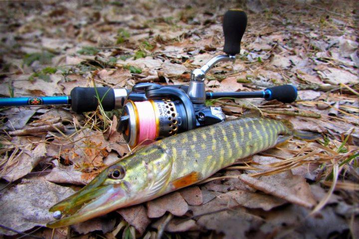 Снасти для рыбалки на щуку