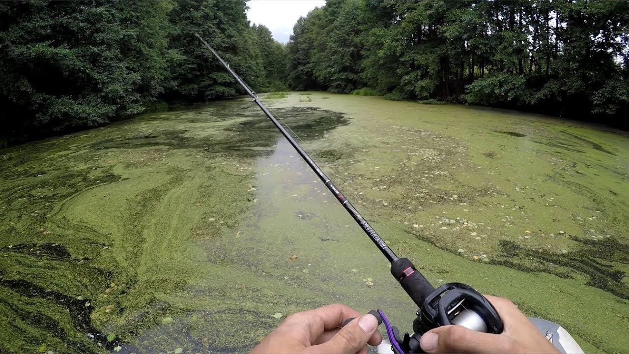 Ловим щуку в болотистой местности. Самая эффективная приманка на хищника