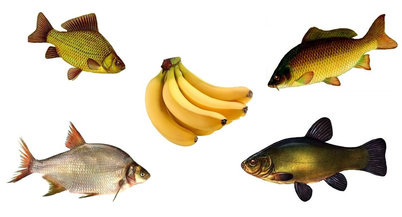 Насадка на основе банана для ловли карпа и карася
