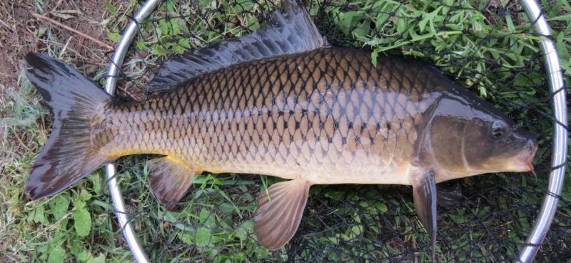 Весенняя рыбалка. Тактика и техника ловли сазана
