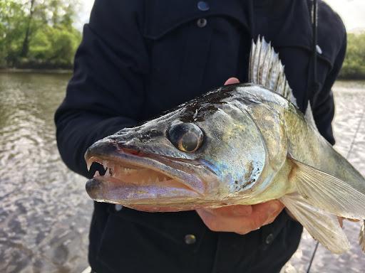 Весенняя ловля судака: как правильно подготовиться к рыбалке