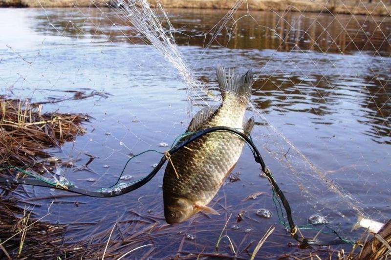 7 запрещенных видов ловли рыбы