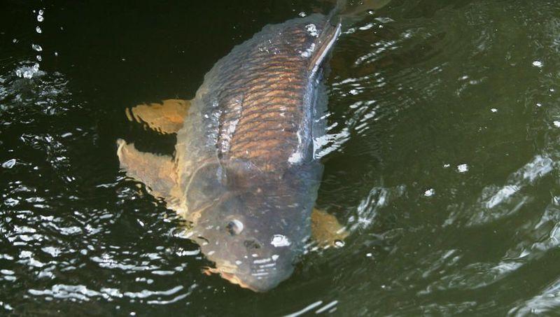 Чтобы не было схода рыбы