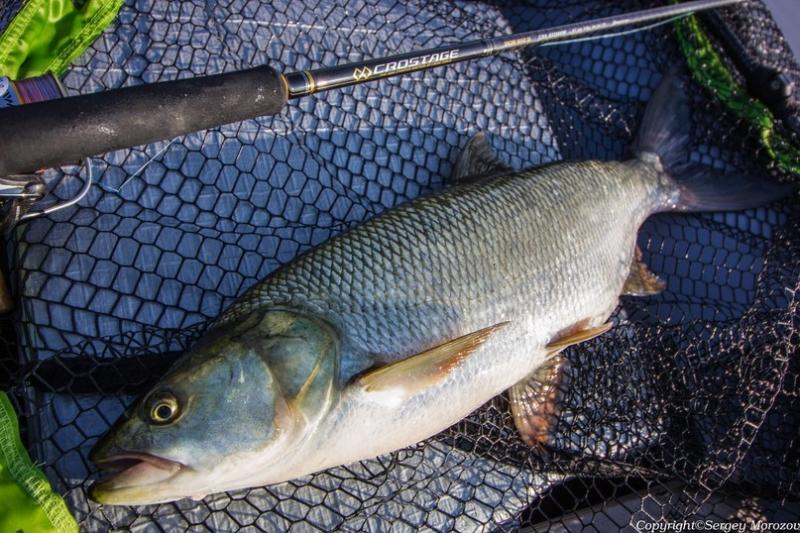 Рыбалка на жереха. Ловля «вслепую»