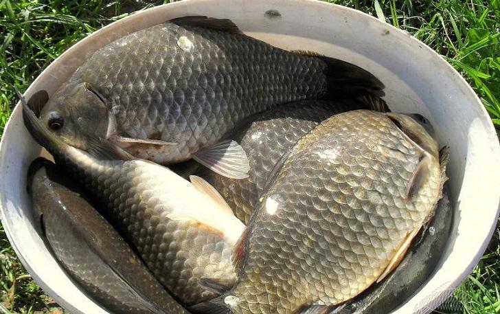 Секреты рыбалки. Ловля карася на сало