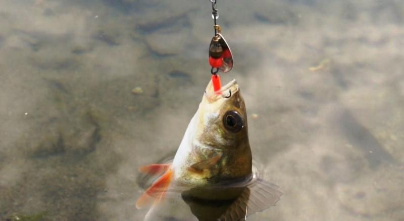 Ловля на вертушки на маленьких водоёмах