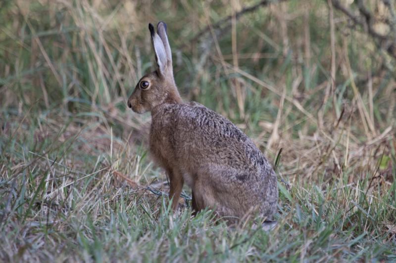 Как поймать зайца в лесу