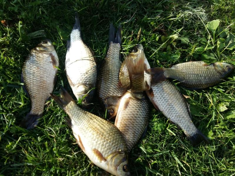 Рыбалка на карася. Стоит ли прикармливать рыбу