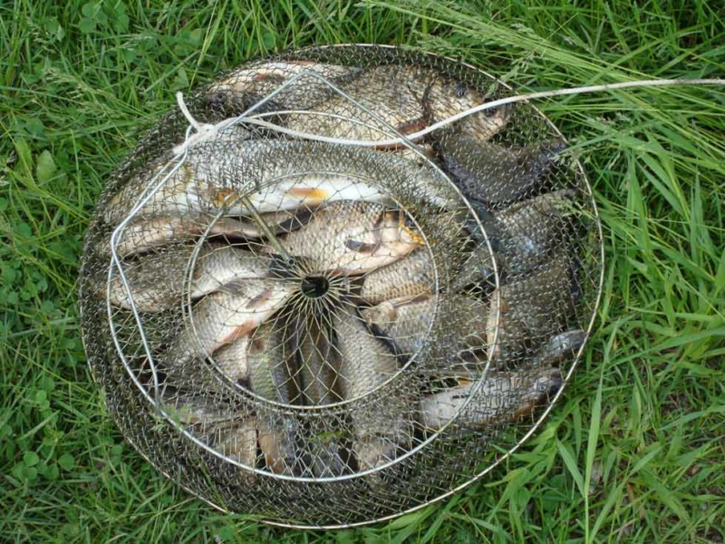 Секреты рыбалки. Как сохранить живой пойманную рыбу