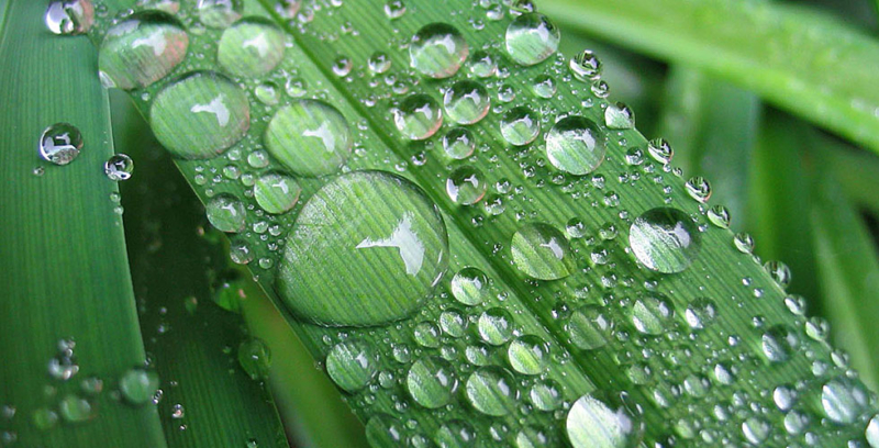 Трудно ли найти или добыть воду в лесу? Нет, если знать, как