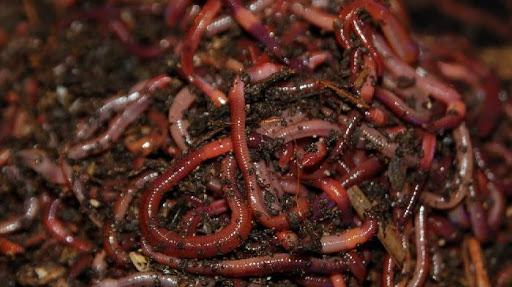 Как правильно хранить червей для рыбалки?
