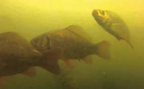Метод как остановить и задержать стаю рыб при ловле в проводку