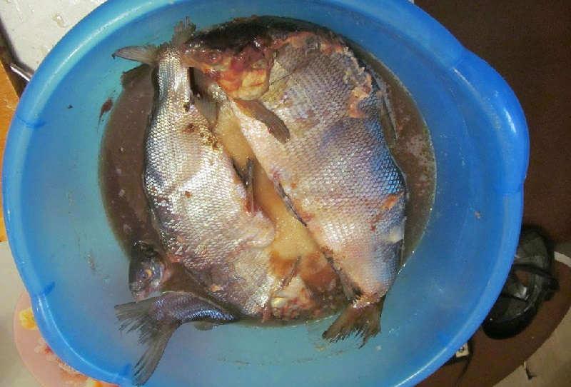 Наловили рыбы? Как ее засолить