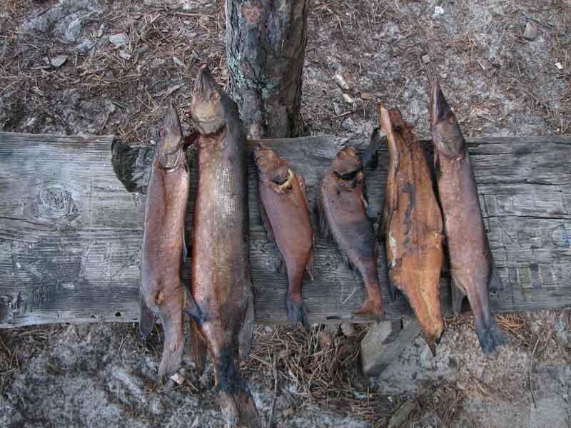 Как легко и просто закоптить любую рыбу в походных условиях