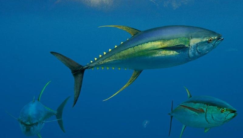 23 вида рыб нежелательных (и даже опасных) к употреблению