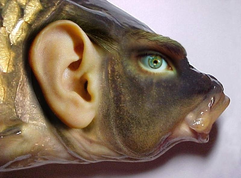 Слышит ли рыба?